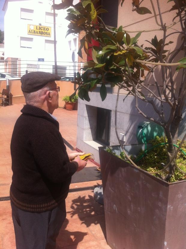 Pepe limpiando de hojas amarillas al magnolio